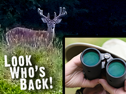 Summer Scouting: New Hunting Strategies