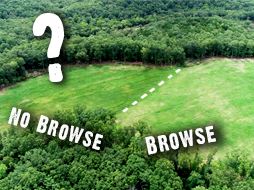 The Food Plot That Attracts More Deer