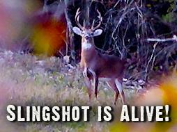Slingshot Survived and We're Back on the Hunt!