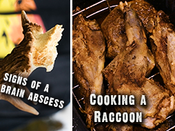 Shed Antler Secrets! Plus: Tips for Cooking A Raccoon