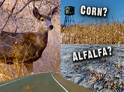 Better Deer Hunting for a Kansas Ranch and a 45 Acre Iowa Property