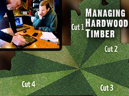 Tips for Managing Hardwood Timber for Better Deer Hunting