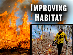 Prescribed Fire: An Incredible Whitetail Habitat Management Tool