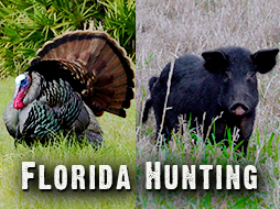 Great Turkey and Hog Hunting Action in South Florida!