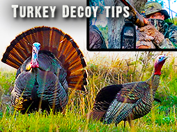 How Changing Decoy Strategies Led To Tagging a Tom