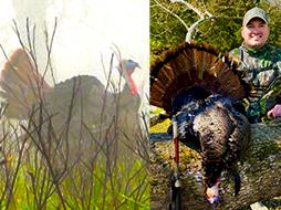 Turkey Hunting | A Hung Up Tom