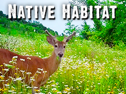 The Results: How Prescribed Fire Improves Native Habitat