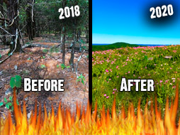 Chainsaws, Fire, and Wildflowers: Transforming A Property for Better Hunting 2018-2020