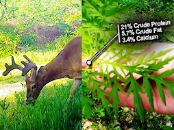 Antlers and the Benefits of Native Browse | Cool Critter Update: Predators and Prey