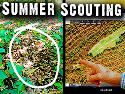 Summer Scouting: Scrapes, Travel Corridors, Pinch Points, Wind Direction