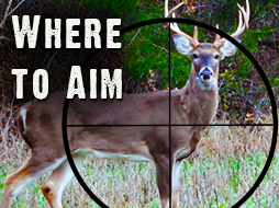Where to Aim: A Guide for Deer Hunters