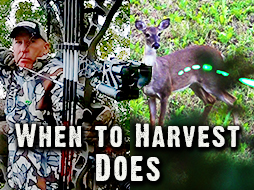 Deer Hunting: Why and When to Harvest Does