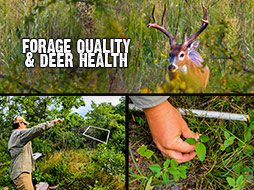 Forage quality and its relationship to antler size