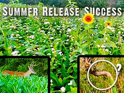 Summer Release Food Plot Blend Success