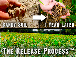 Results In Sandy Soil: One Year Later