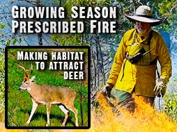 Making Habitat to Attract Deer