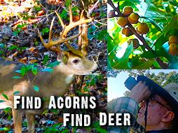 Find Acorns, Find Deer!