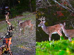 Doe Harvest: What's Your Excuse?