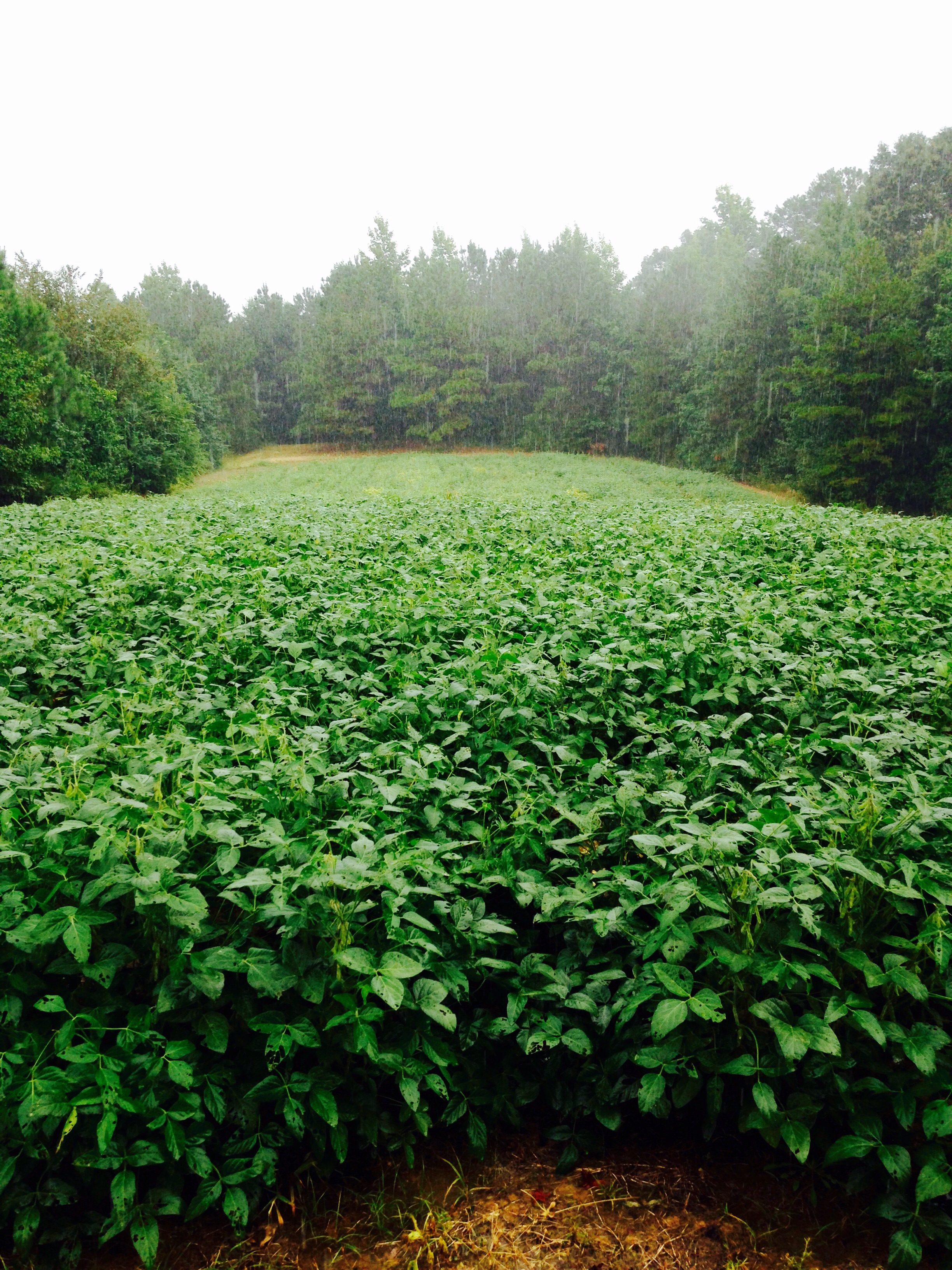 Food Plots Hunting Advice And Tips For Serious Deer And Turkey