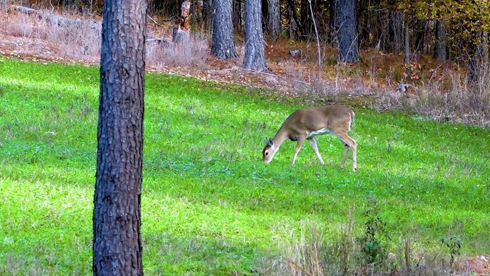10 lbs FORAGE PRO BIG 12 FOOD PLOT SEEDS DEER WILL NEVER PASS UP THIS CHOICE